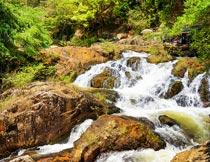 茂盛山林中的岩石流水美景摄影图片