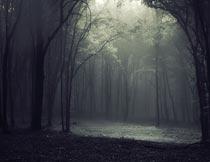 阴森昏暗森林里的一缕阳光摄影图片