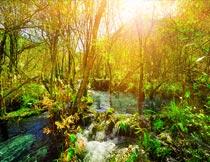黄昏下美丽树林与水流景色摄影图片