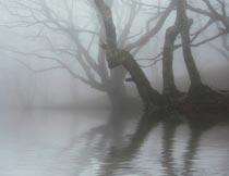 河边雾气弥漫的古树与倒影摄影图片