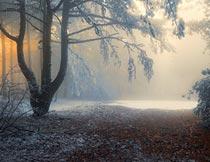 冬季阳光照射下的森林全景摄影图片