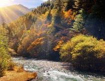 阳光下的高山树林流水秋景摄影图片