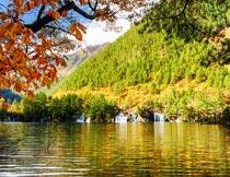 秋天树枝水面与山峰美景摄影图片