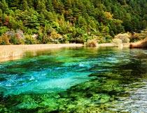秋天美丽的湖水与树林风光摄影图片