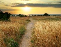 黄昏海边的羊肠小道美景摄影图片
