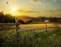 黄昏下美丽的田园栅栏草丛摄影图片