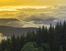 山峰上的树木与云海美景摄影图片