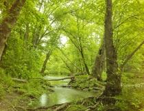 茂盛丛林里的沼泽地美景摄影图片