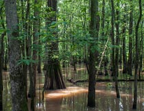 水面上茂盛的树林自然风光摄影图片
