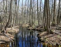 冬季树林里的湿地自然风光摄影图片