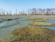 荒无人烟的沼泽湿地美景摄影图片