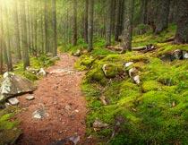 阳光穿过的茂盛树林风光摄影图片