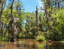 蓝天白云下丛林深处的积水摄影图片