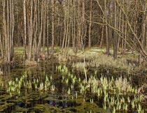 水面上的水草与树木风光摄影图片