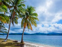 蓝天白云大海椰树自然风光摄影图片