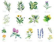 手绘水彩风格花卉植物主题矢量素材