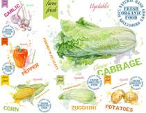 玉米白菜与辣椒等水彩主题矢量素材