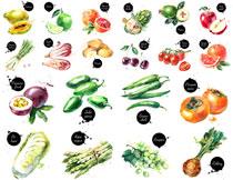 柿子辣椒等水彩风格水果蔬菜矢量素材
