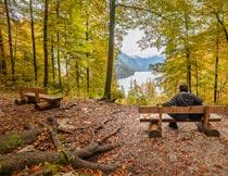 秋天树林里长椅上的男人摄影图片