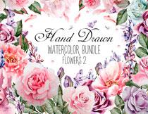 手绘水彩风格玫瑰花等主题免抠素材
