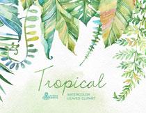 浓浓热带风情树叶主题水彩免抠素材