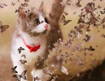 创意的照片被蝴蝶打散特效PS动作