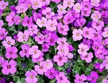 浪漫唯美粉红鲜花植物摄影高清图片