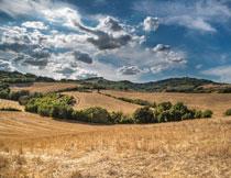 天空白云与收割后的农田高清图片