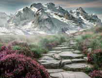 雪山与山脚下的山路花草高清图片