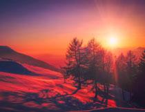 暖阳下山脚树木风光摄影高清图片