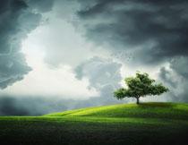 天空乌云坡上的大树摄影高清图片