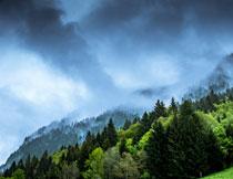 云雾笼罩的山坡树林风景高清图片