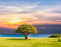 霞光美景与海边的大树高清图片