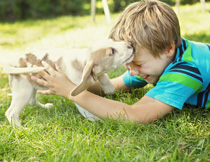 与小狗玩耍的小男孩摄影高清图片