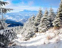 蓝天雪山树木风光摄影高清图片