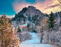 积雪覆盖下的树木高山摄影图片