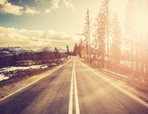 树木道路风景逆光摄影高清图片