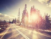路边树林风景逆光摄影高清图片