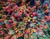五彩缤纷树木风光摄影高清图片
