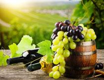 酒桶与葡萄酒原料摄影高清图片