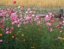 野外花草植物风光摄影高清图片