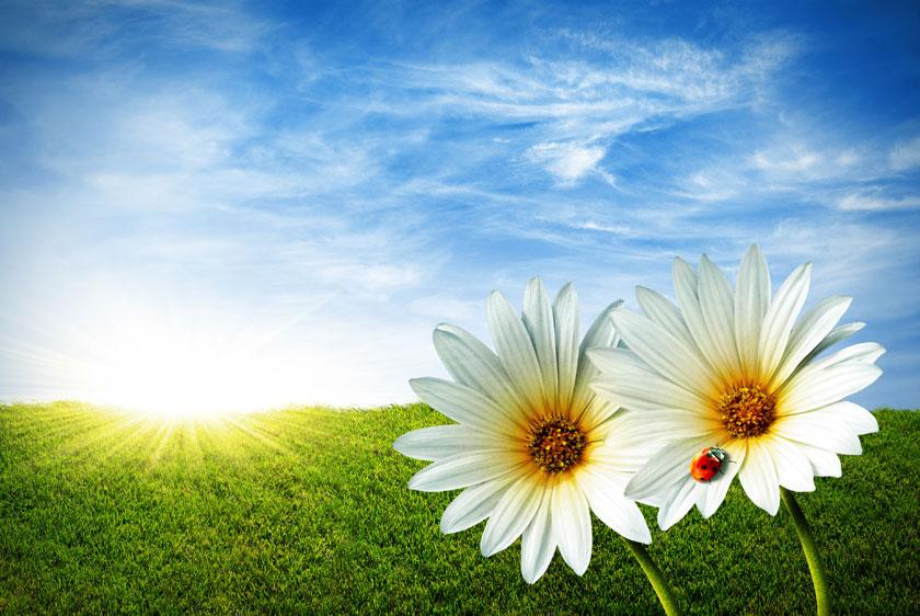风景风光摄影大图图片高清素材 素材描述: 蓝天白云草地花朵摄影高清