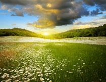 天空乌云花卉草丛摄影高清图片