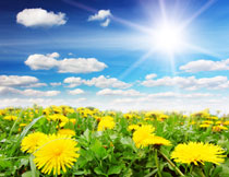 天空云朵与花草丛风光高清图片