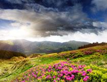 山坡上的鲜艳花朵摄影高清图片