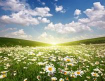 花草丛与朵朵白云摄影高清图片