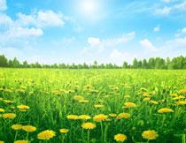 蓝天白云树丛花卉植物高清图片