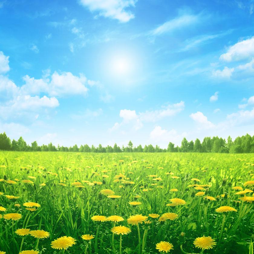 风景风光摄影大图图片高清素材 素材描述: 蓝天白云树丛花卉植物高清