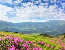 山峦与在山坡上的鲜花高清图片