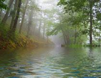 河边斜坡上的树木摄影高清图片